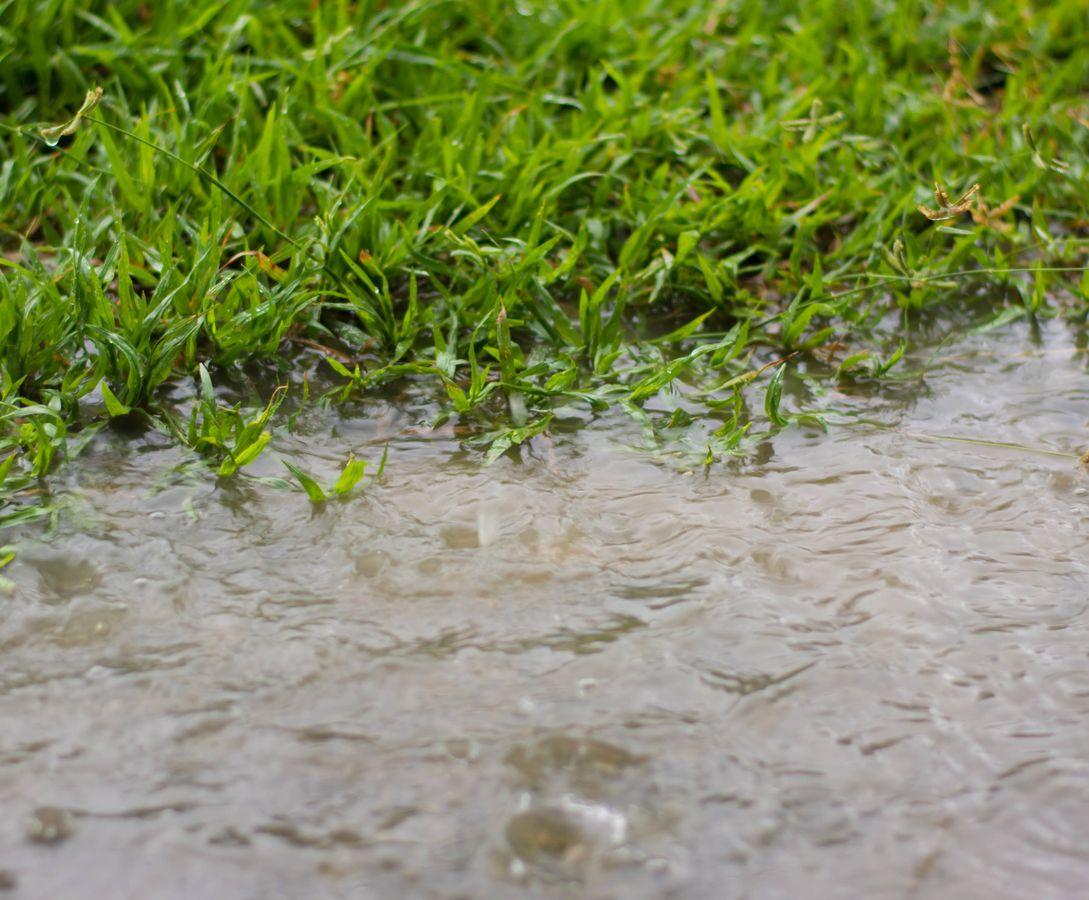 ☔💦 Biodiversité, sols et gestion des eaux pluviales :  solutions et retours d'expérience