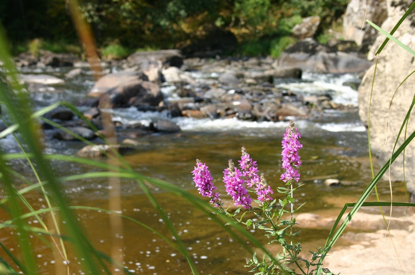 Micropolluants : préserver la ressource en eau, du milieu naturel au consommateur