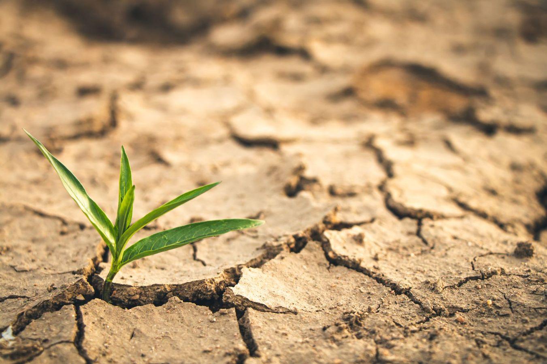 Retour d'expérience sur la gestion de la sécheresse 2019 dans le domaine de l'eau