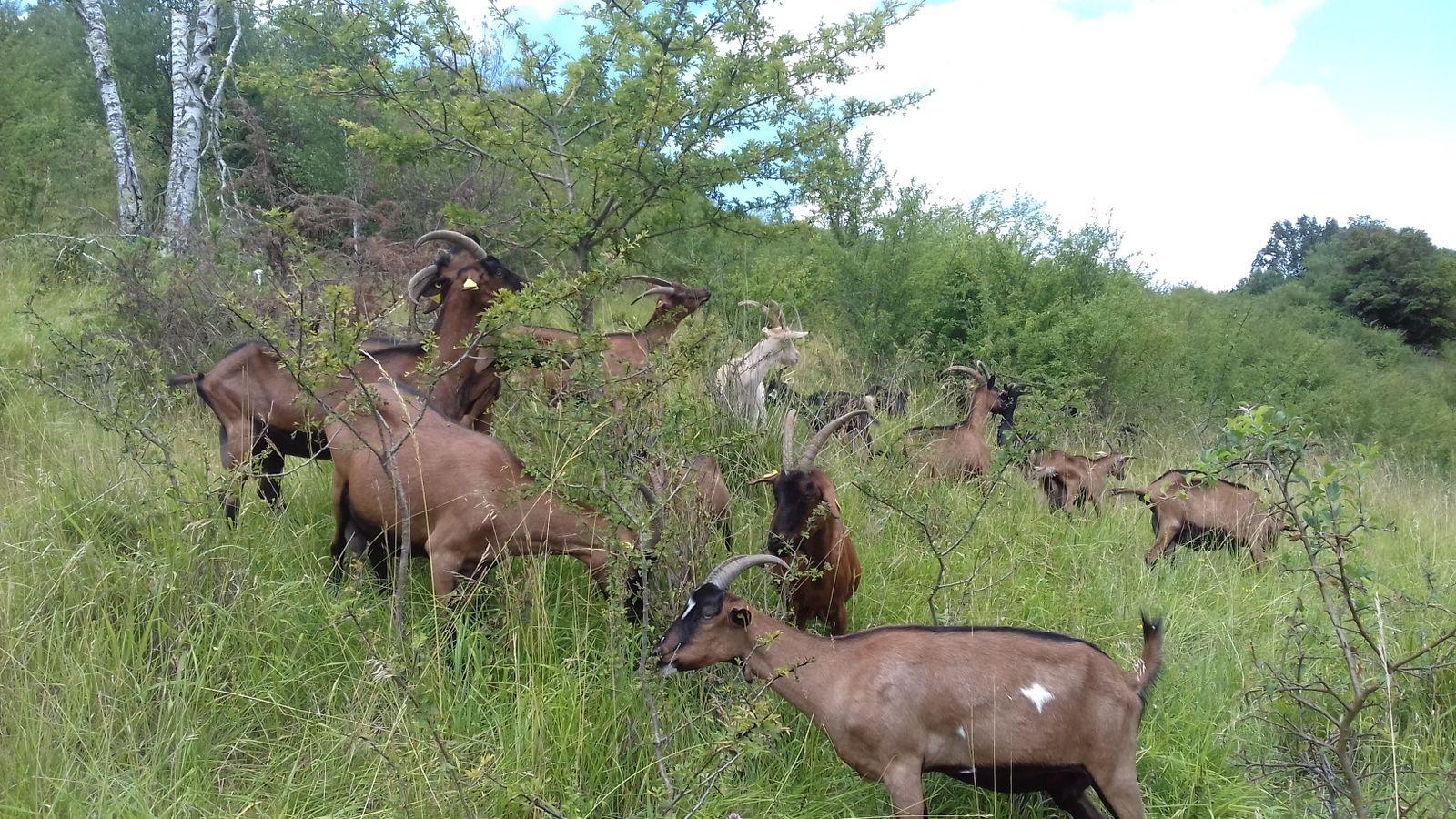 Quels outils au service d'une politique de gestion des espaces naturels ? Retours d'expérience du département du Doubs sur l'Association Foncière Pastorale Autorisée