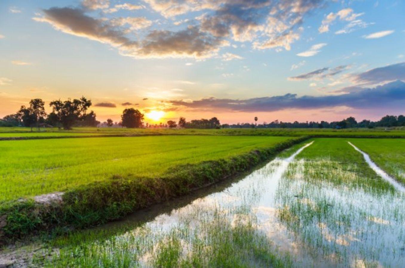 #ANB2020 - V19. Quels accompagnements des pratiques agricoles en faveur de la biodiversité des milieux humides ?