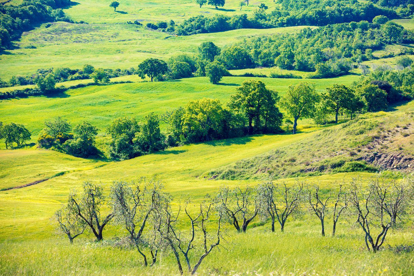 Surfaces agricoles à reconquérir : Connaître la procédure de mise en valeur des terres incultes