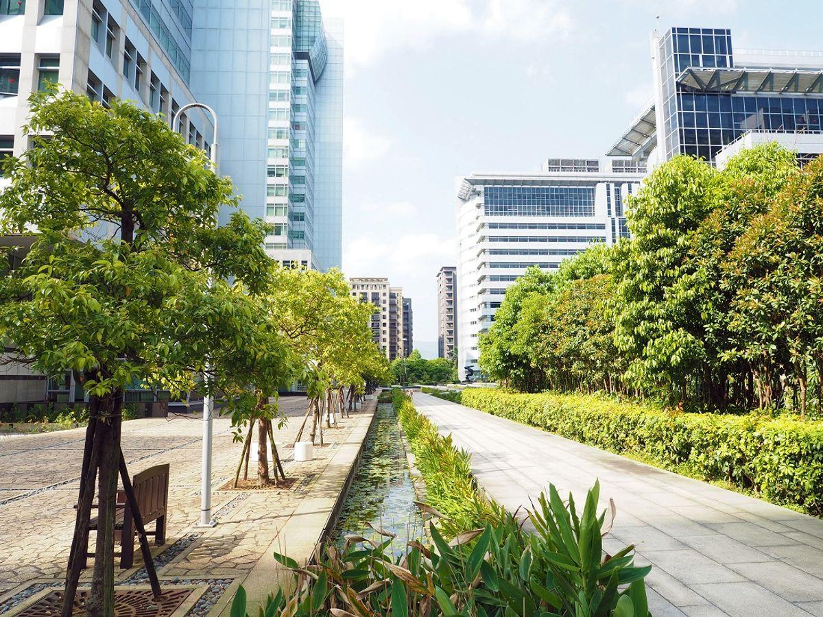 🌳 L'arbre notre meilleur allié pour tendre vers la résilience urbaine : quelle stratégie de plantation à long terme ?