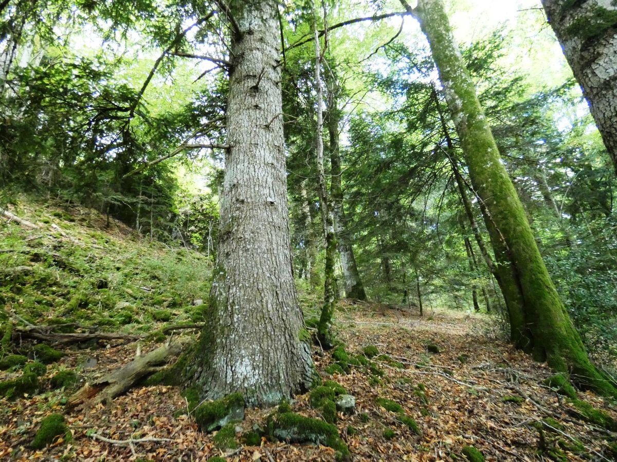 🌳Préserver une trame de vieux bois dans les massifs forestiers : enjeux, objectifs et retours d'expériences