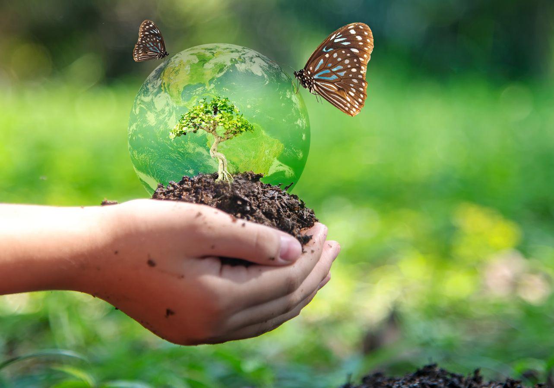 Normaliser pour protéger la biodiversité, un paradoxe ? Présentation des normes volontaires sur le sujet