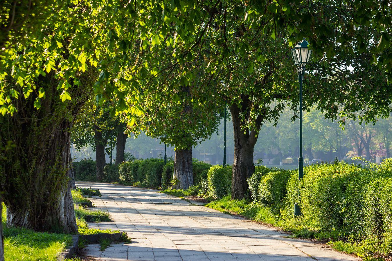 10 actions concrètes pour la protection de l'arbre en ville à travers la modification du PLU. Retour d'expérience de Vannes