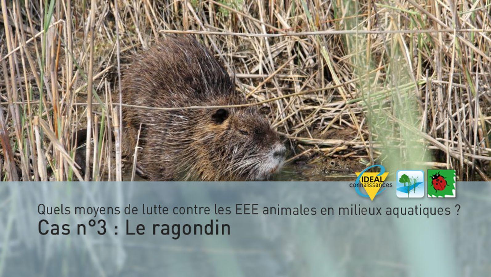 Quels moyens de lutte contre les EEE animales en milieux aquatiques ? Cas n°3 : Le ragondin