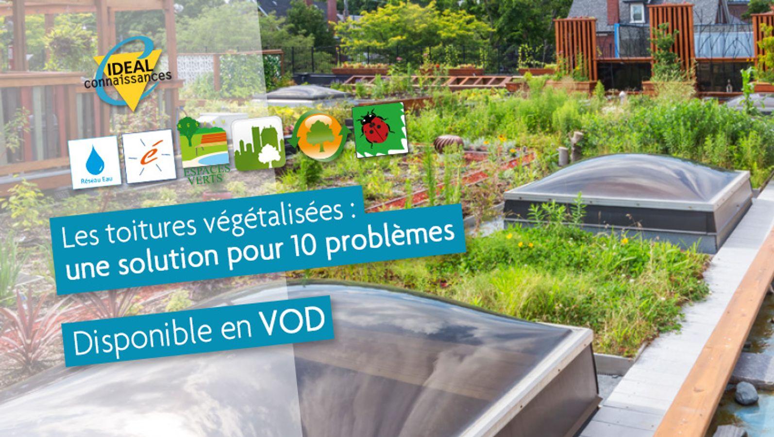 Les toitures végétalisées : une solution robuste qui résout de nombreux problèmes