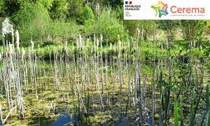 Préserver les zones humides pour la gestion des crues et des eaux pluviales